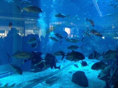 Aquarium in The Dubai Mall