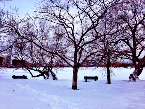 The Charles River Park